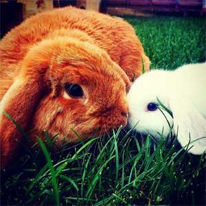 cute-plot-bunny